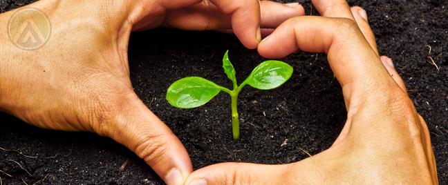 hand-heart-plant